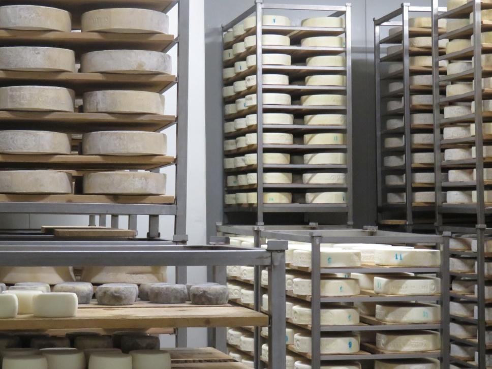 Reifung von Käse
